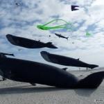 Pod of whale kites