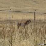 i74-antelope-gallery_007