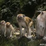 i75-monkey-malaysia_015