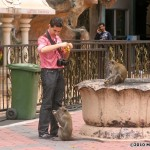 i75-monkey-malaysia_018