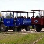 T-Tulip Town Tractors