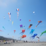 Giant kite display