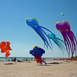 Large kite displays