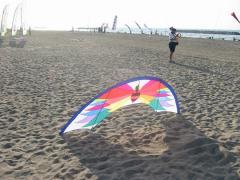 SkyHummer (the last kite that David Davies made)