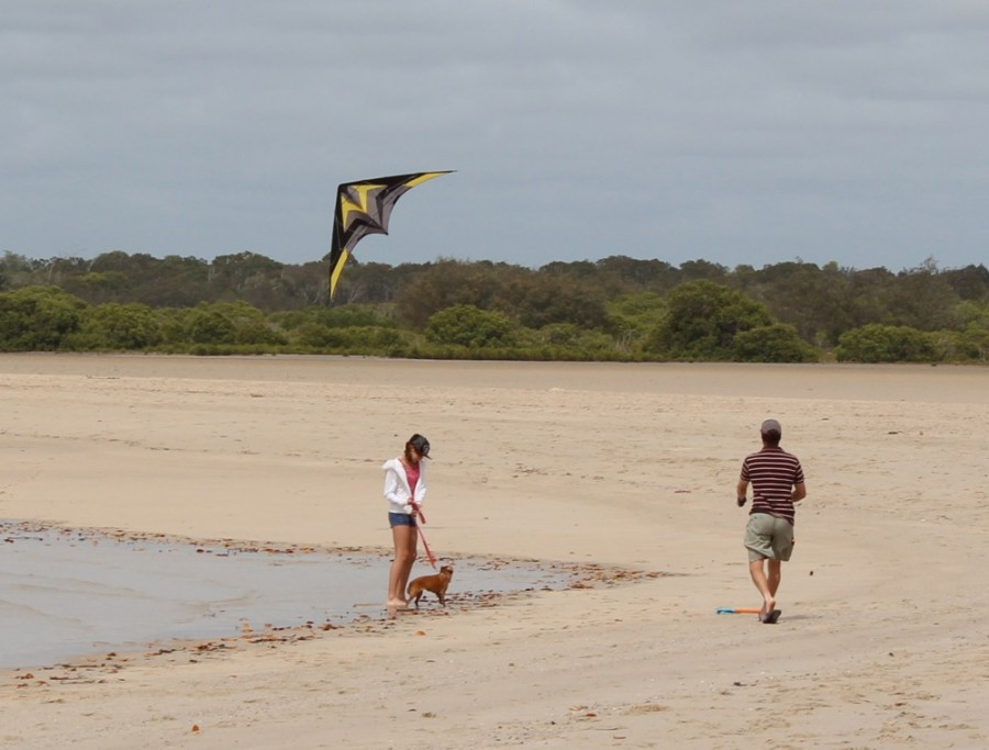 Little girl, small dog and a kite