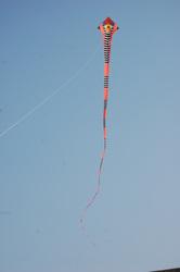Mehul Pathak Kite Flyers Gujarat