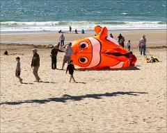Nemo relative size