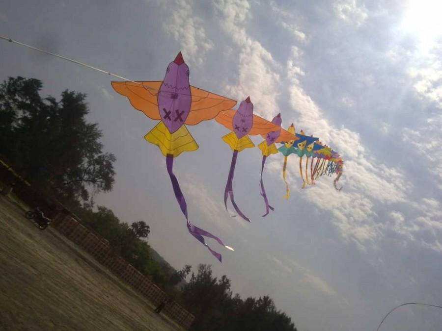 bird train kite