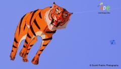 3d tiger kite Adk ashok designer kites