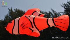 fish Adk wind shock ashok designer kites
