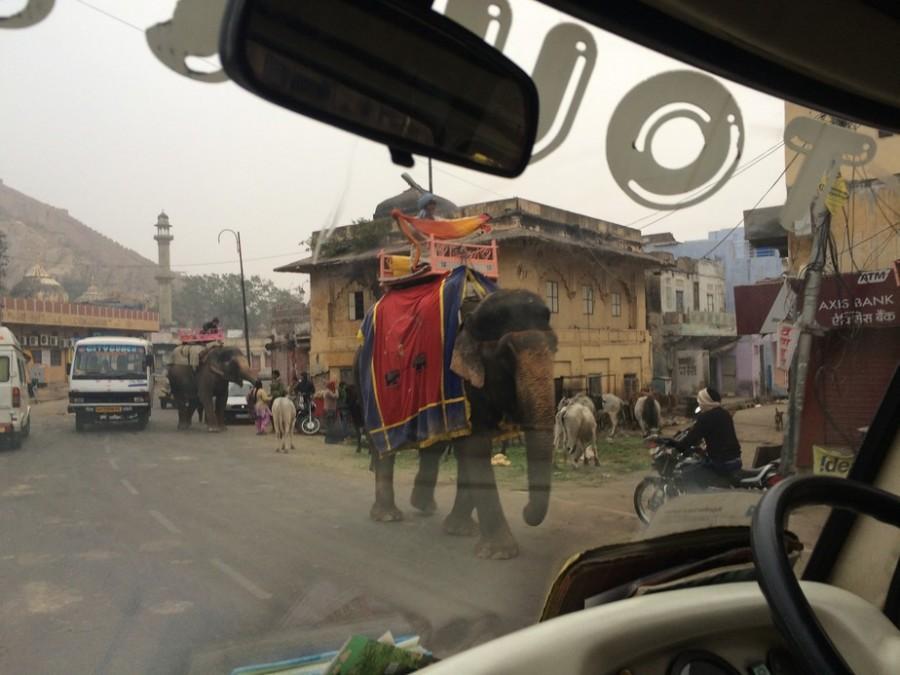 Elephants getting closer...