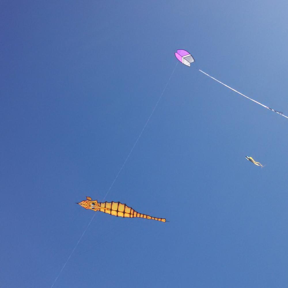 Morro Bay Kite Festival 2016 - Gibian kites