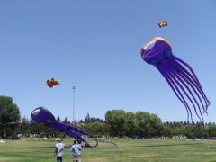 San Ramon Art and Wind Festival 2016 - Octopi