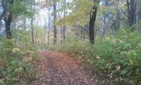 mini-autumnWalk.jpg